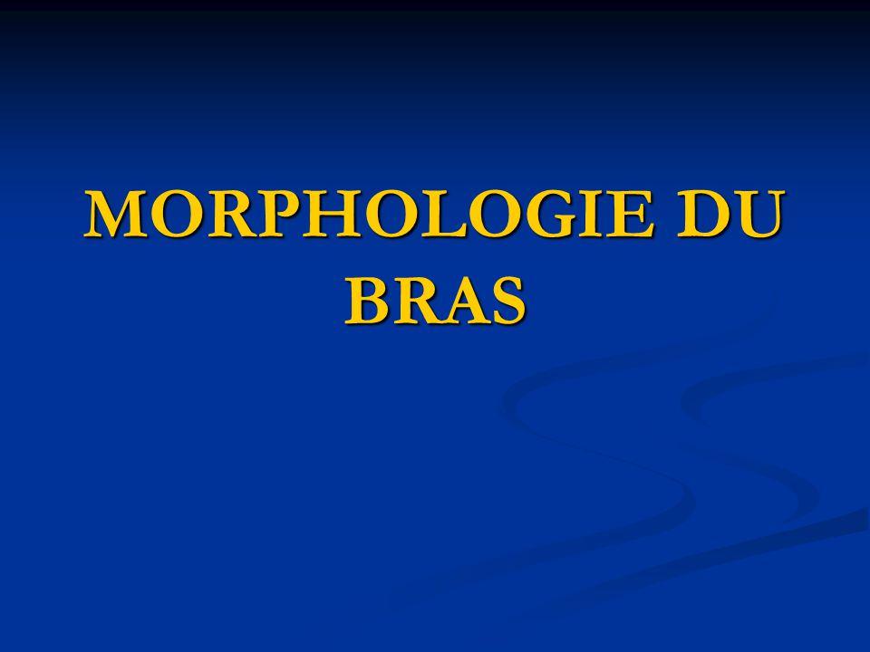 MORPHOLOGIE DU BRAS