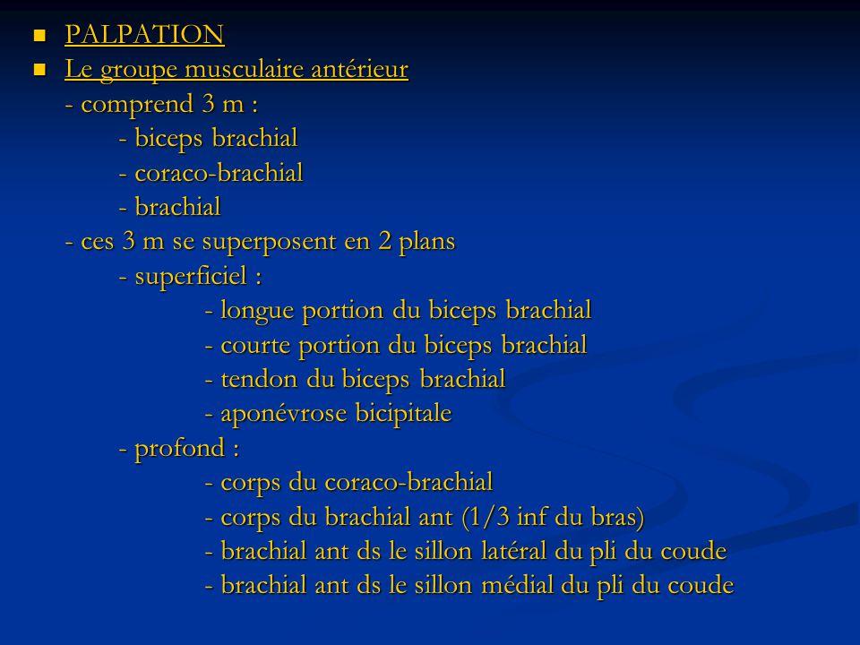 PALPATION Le groupe musculaire antérieur. - comprend 3 m : - biceps brachial. - coraco-brachial.