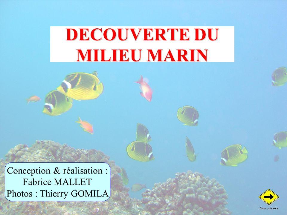 DECOUVERTE DU MILIEU MARIN