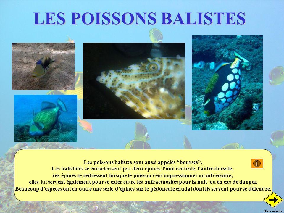 Les poissons balistes sont aussi appelés bourses .
