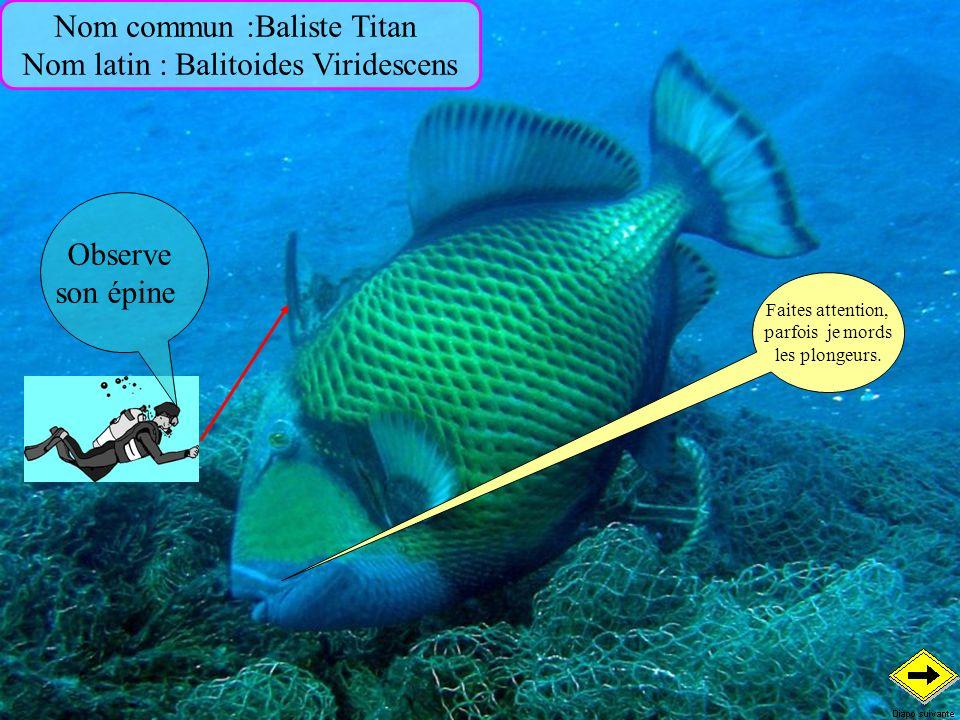 Nom commun :Baliste Titan Nom latin : Balitoides Viridescens