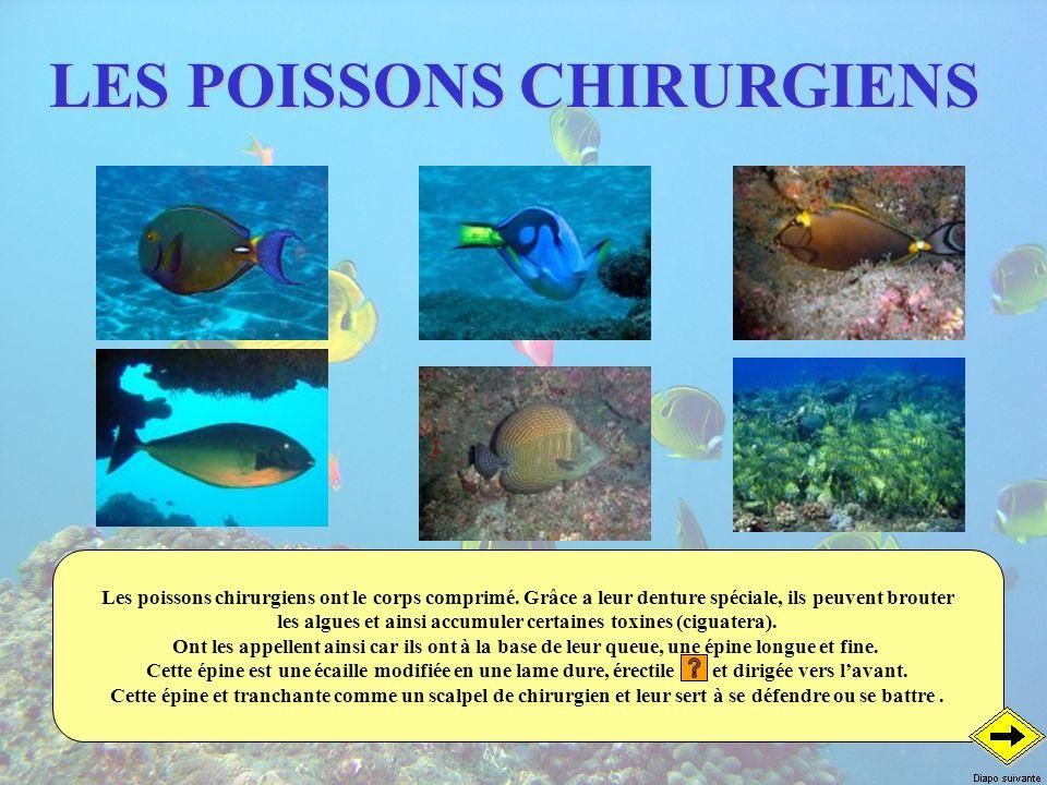 LES POISSONS CHIRURGIENS
