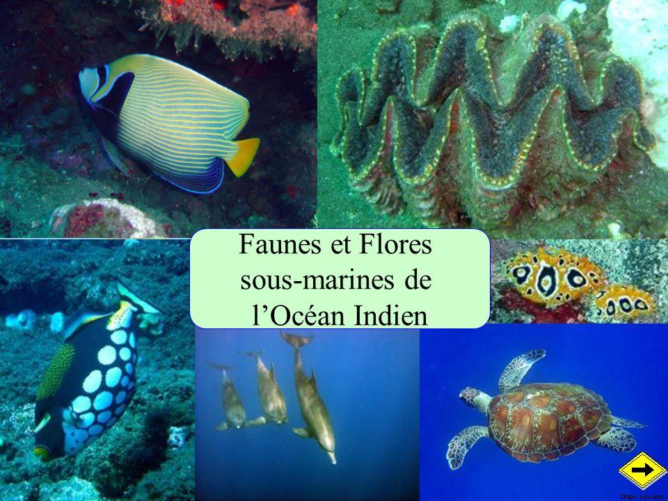 Faunes et Flores sous-marines de l'Océan Indien