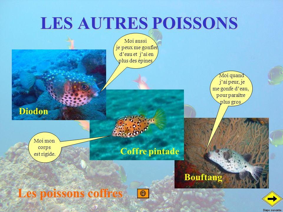 LES AUTRES POISSONS Les poissons coffres Diodon Coffre pintade