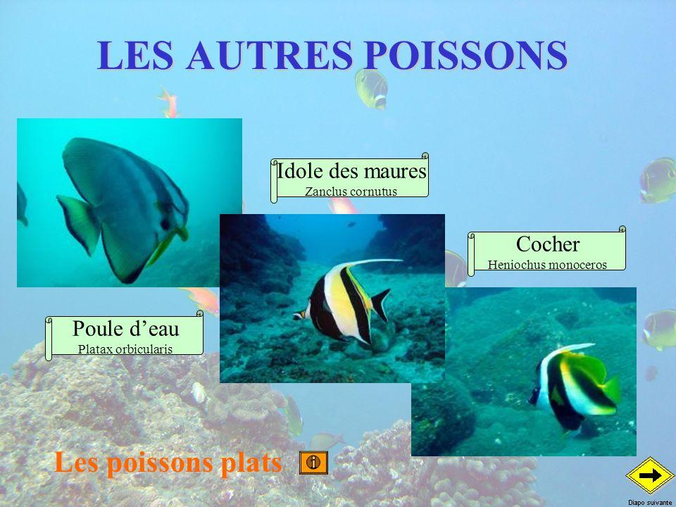 LES AUTRES POISSONS Les poissons plats Idole des maures Cocher