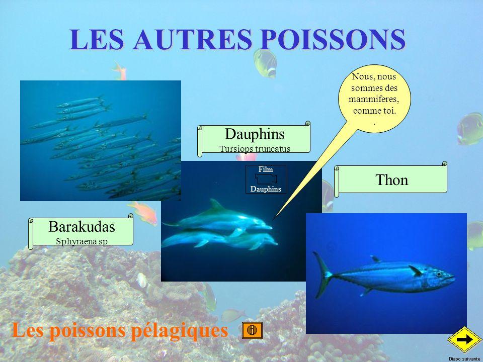 Les poissons pélagiques