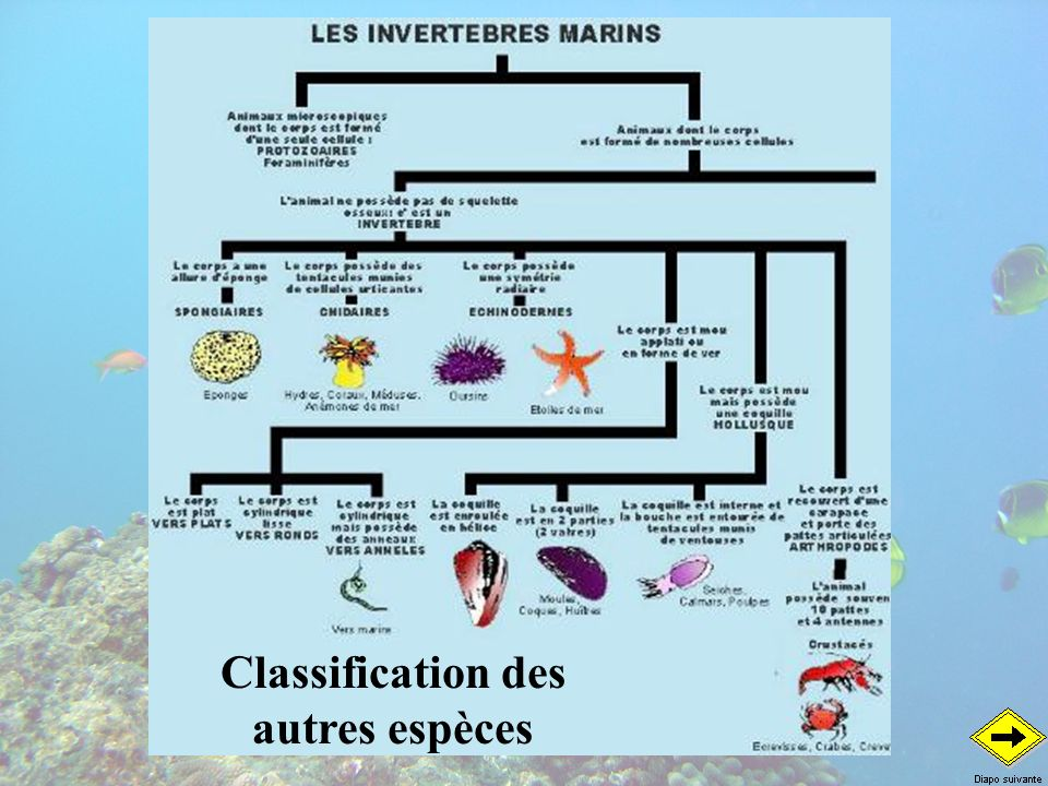 Classification des autres espèces