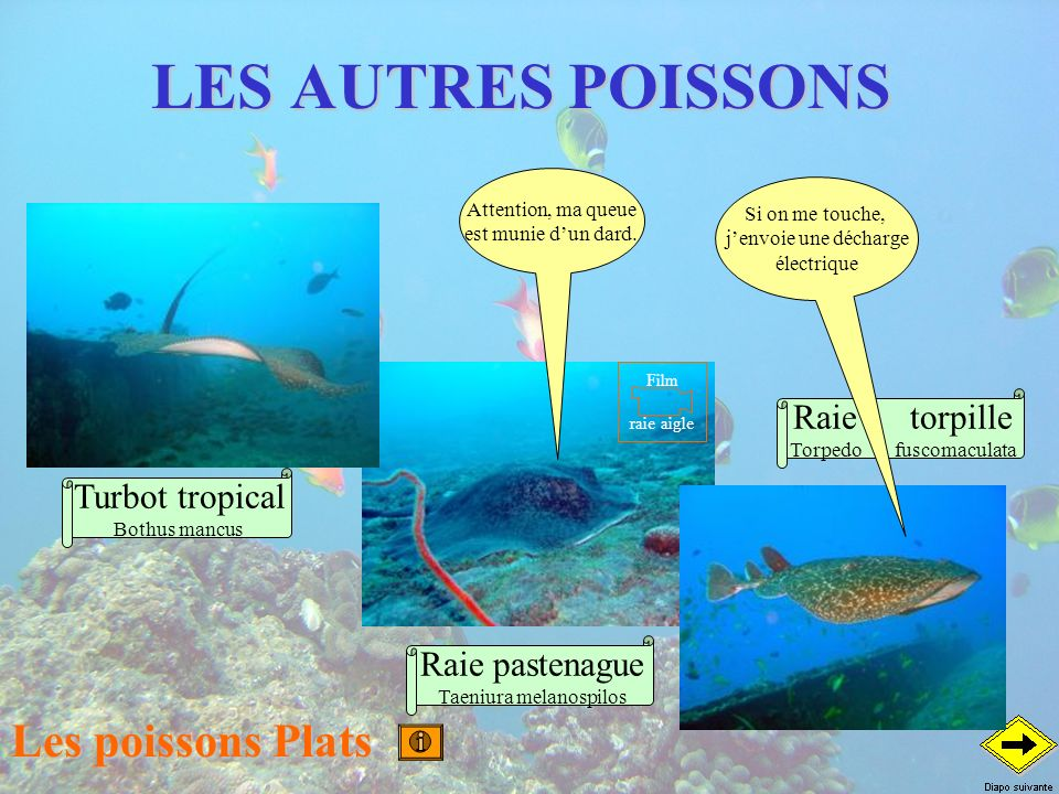 LES AUTRES POISSONS Les poissons Plats Raie torpille Turbot tropical