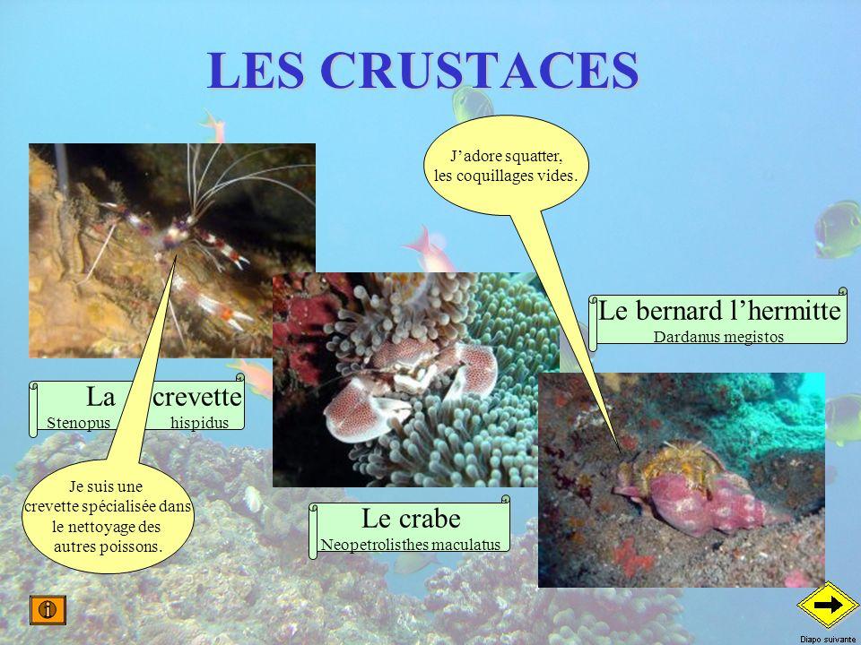 LES CRUSTACES Le bernard l'hermitte La crevette Le crabe