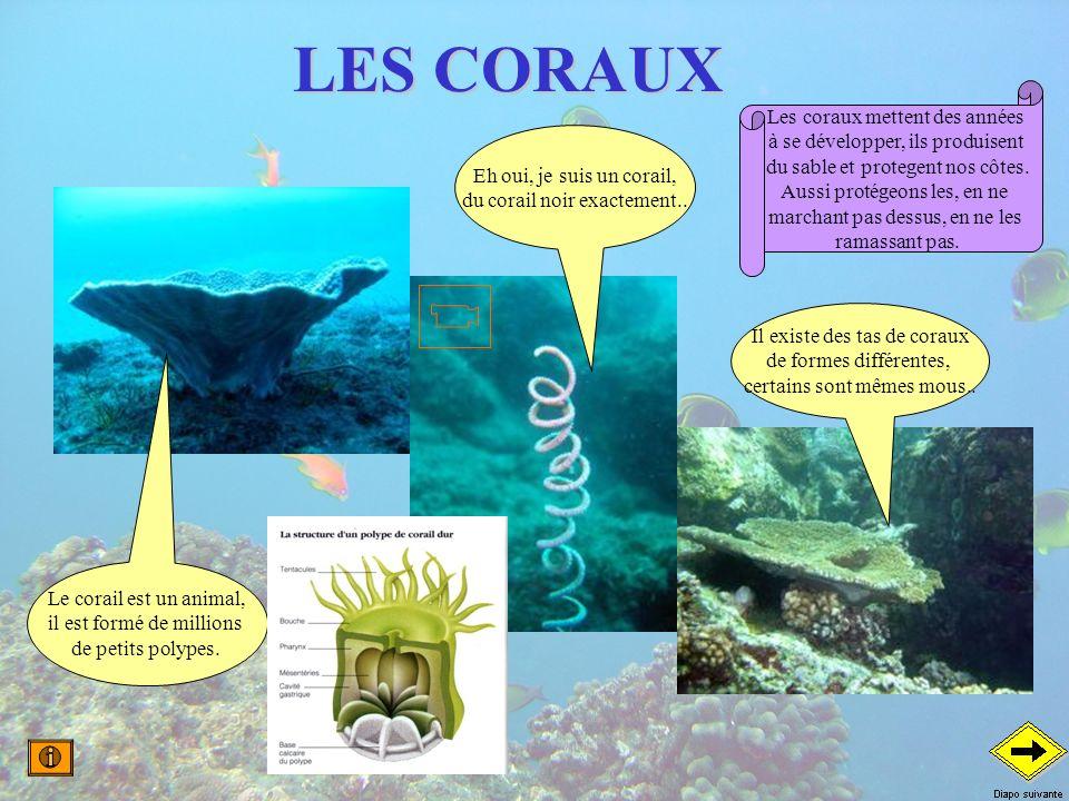 LES CORAUX Les coraux mettent des années