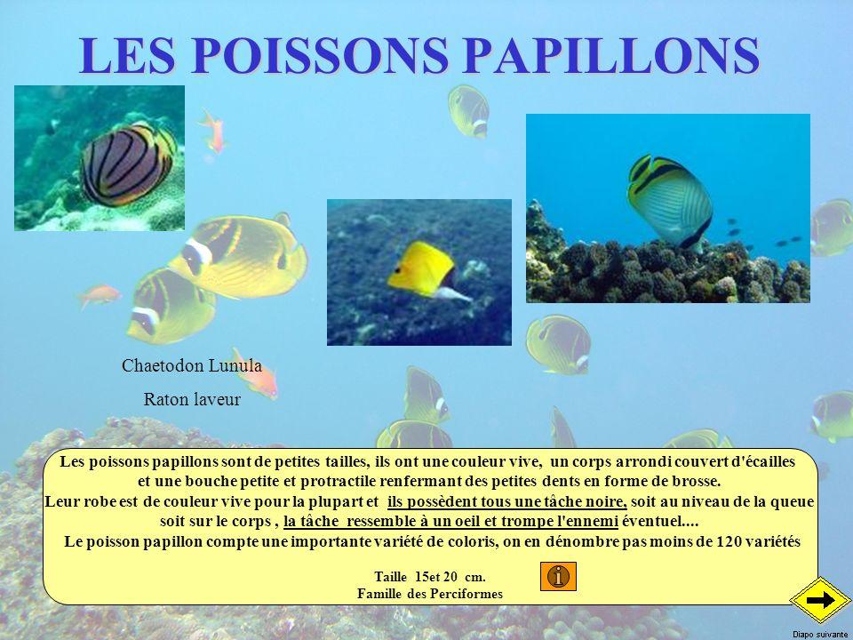 LES POISSONS PAPILLONS