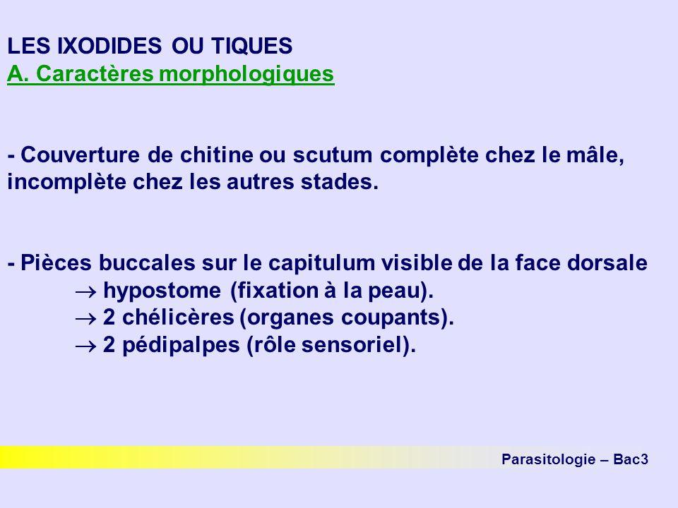 A. Caractères morphologiques