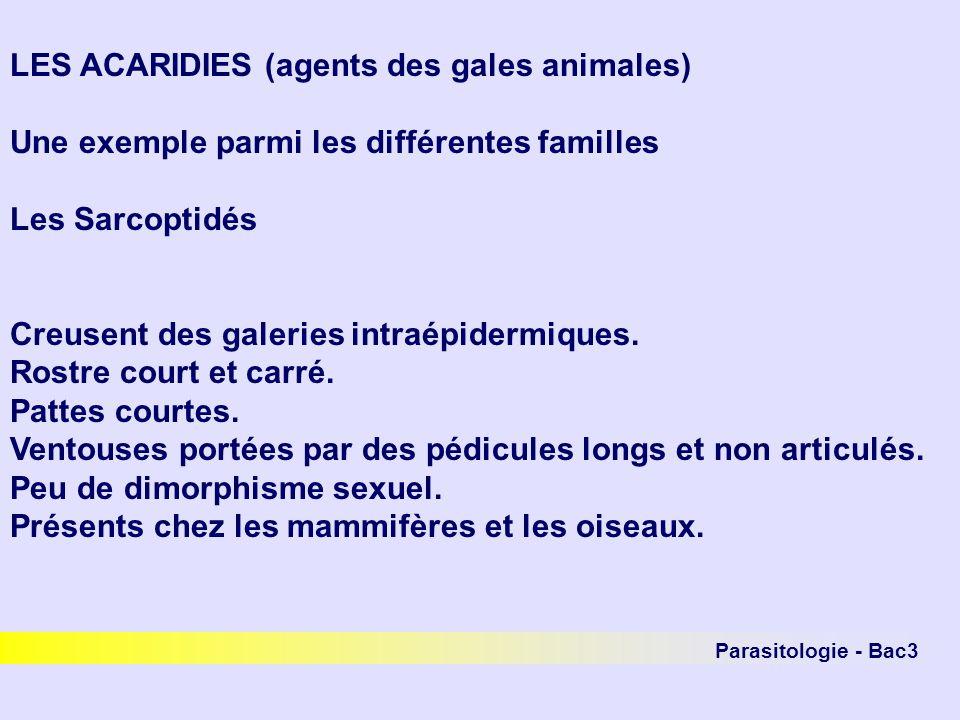 LES ACARIDIES (agents des gales animales)