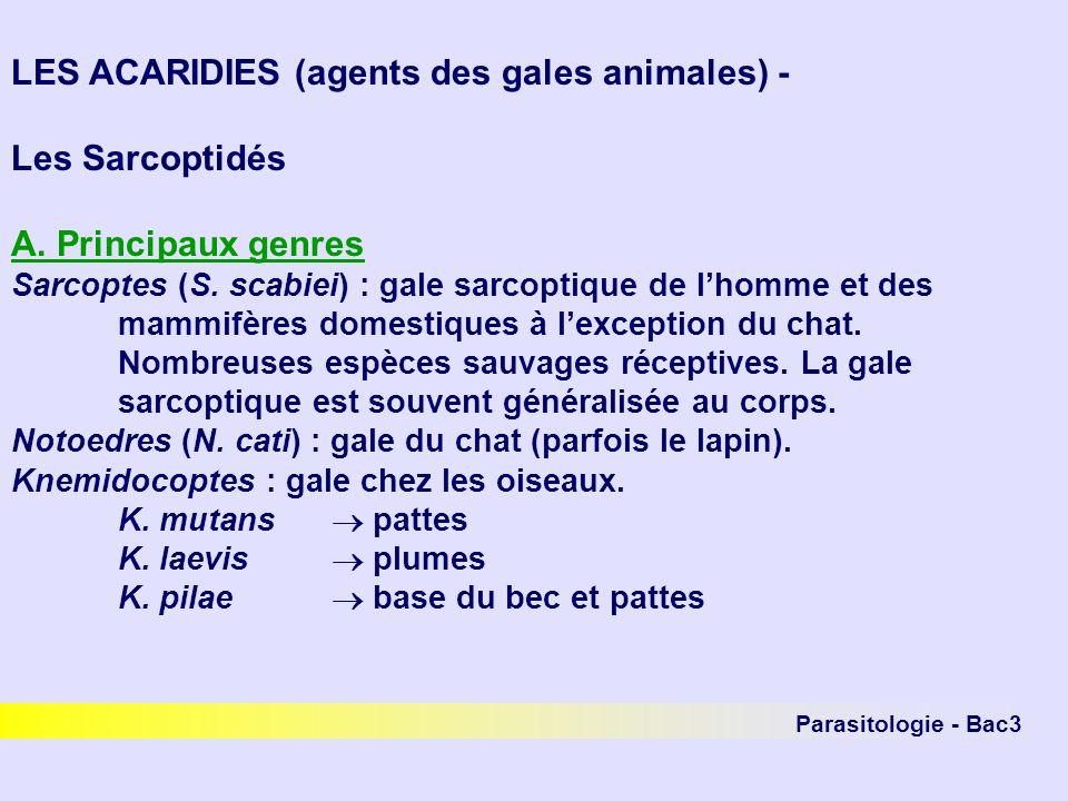 LES ACARIDIES (agents des gales animales) - Les Sarcoptidés
