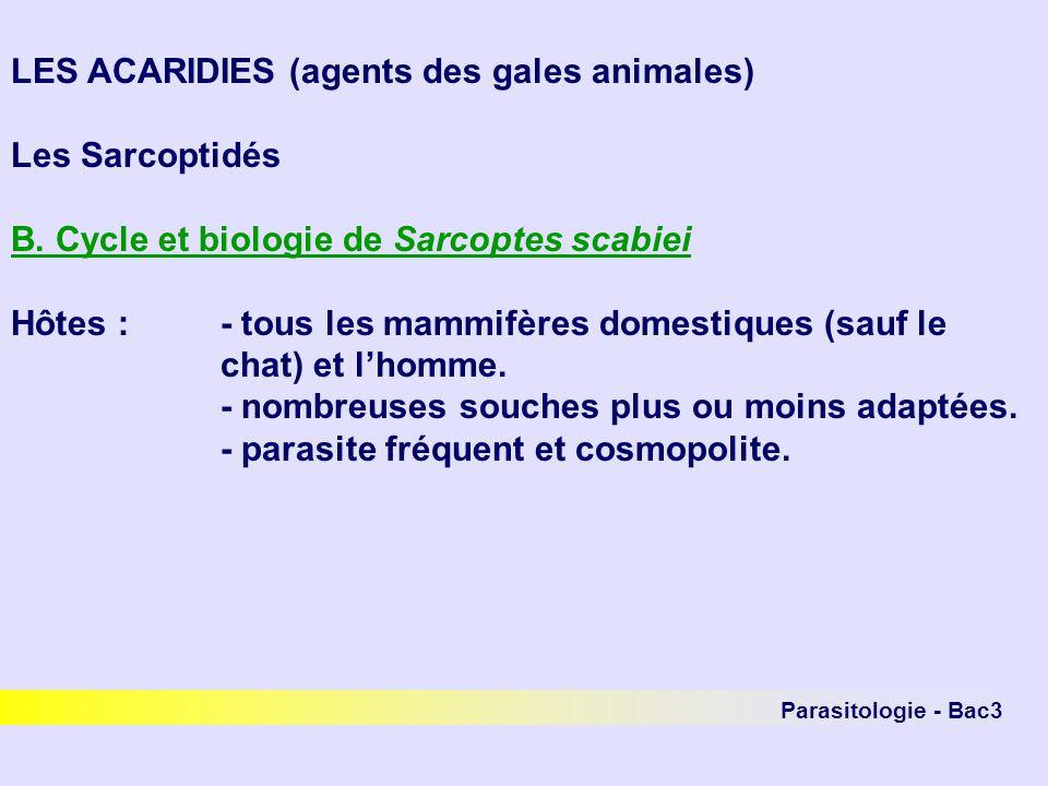 LES ACARIDIES (agents des gales animales) Les Sarcoptidés