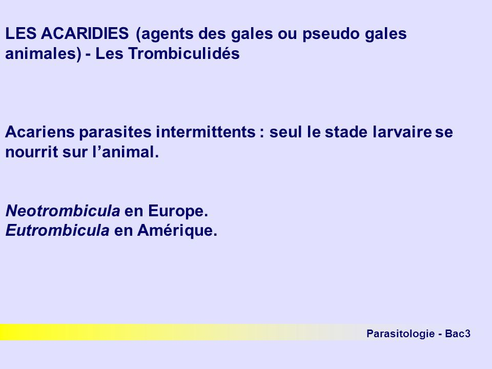 Neotrombicula en Europe. Eutrombicula en Amérique.