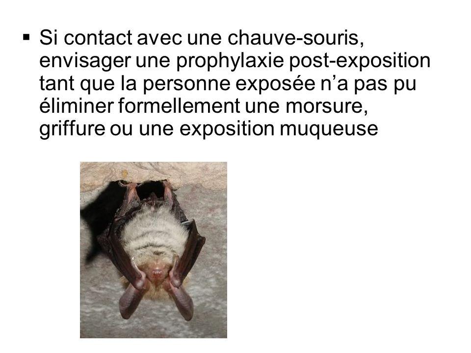 Si contact avec une chauve-souris, envisager une prophylaxie post-exposition tant que la personne exposée n'a pas pu éliminer formellement une morsure, griffure ou une exposition muqueuse