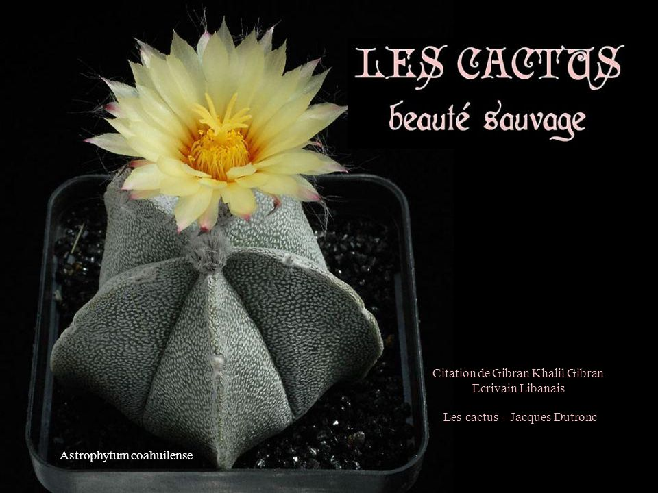 Astrophytum coahuilense Les cactus – Jacques Dutronc