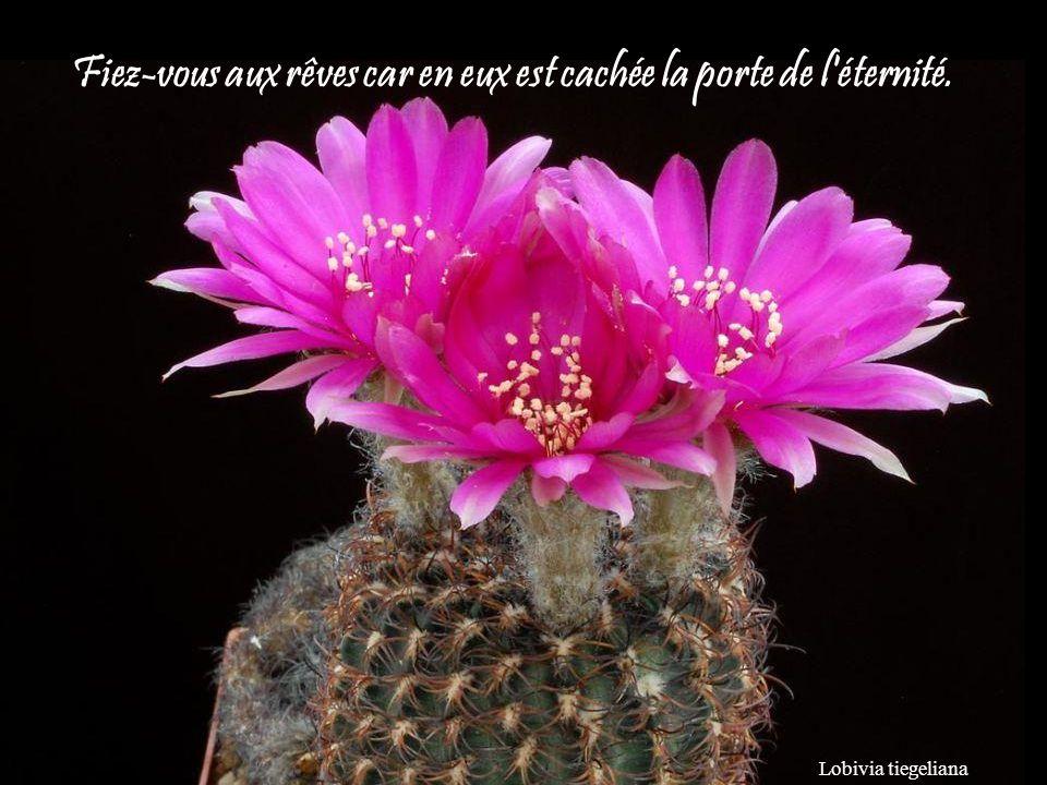 Astrophytum coahuilense les cactus jacques dutronc ppt - Aux portes de l eternite ...