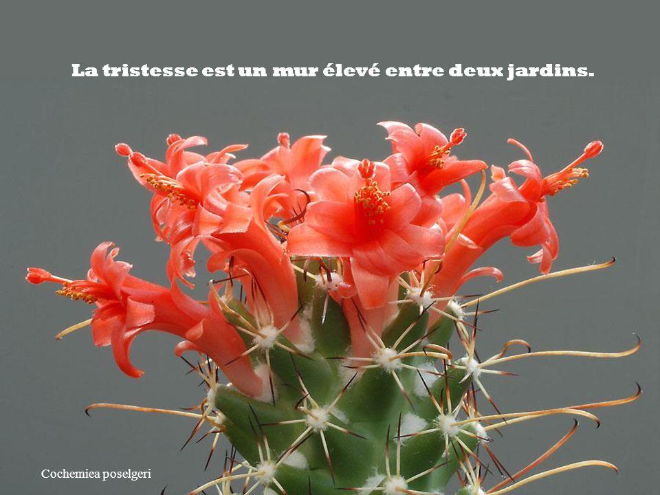 La tristesse est un mur élevé entre deux jardins.