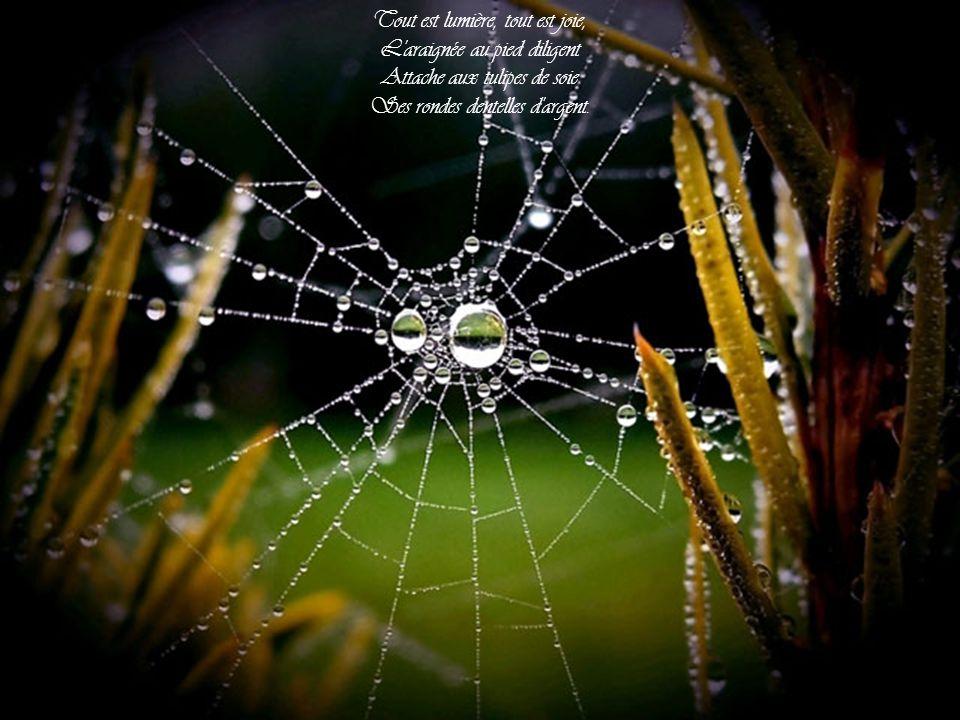 Tout est lumière, tout est joie, L araignée au pied diligent