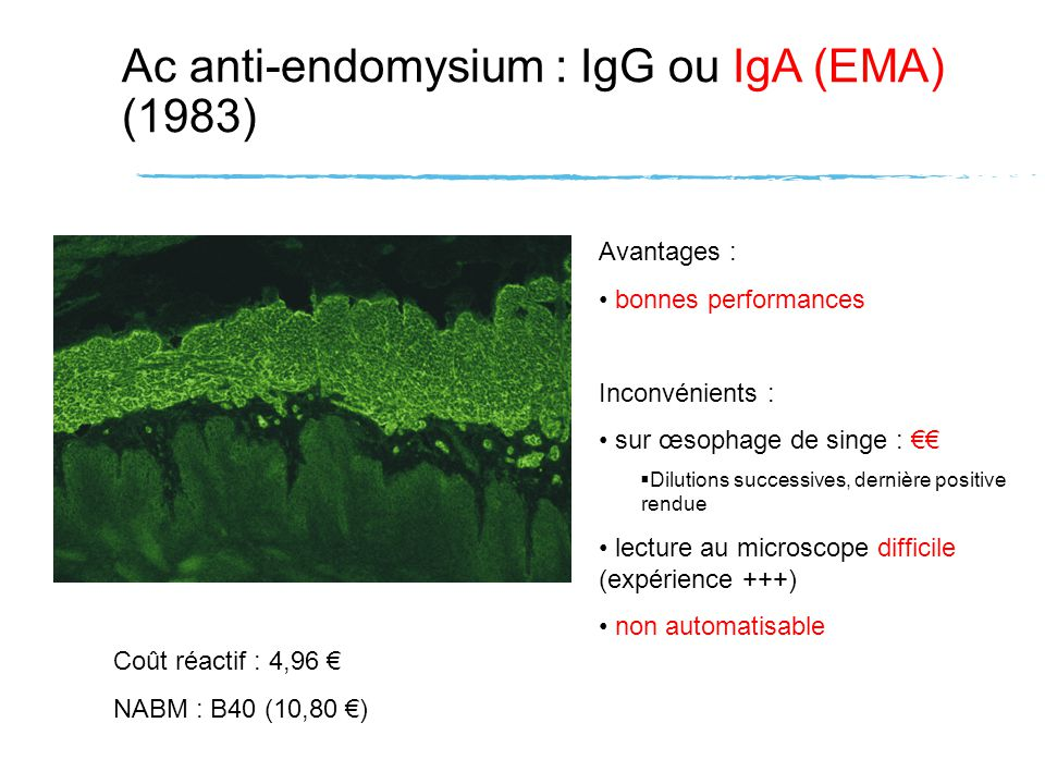 Ac anti-endomysium : IgG ou IgA (EMA) (1983)