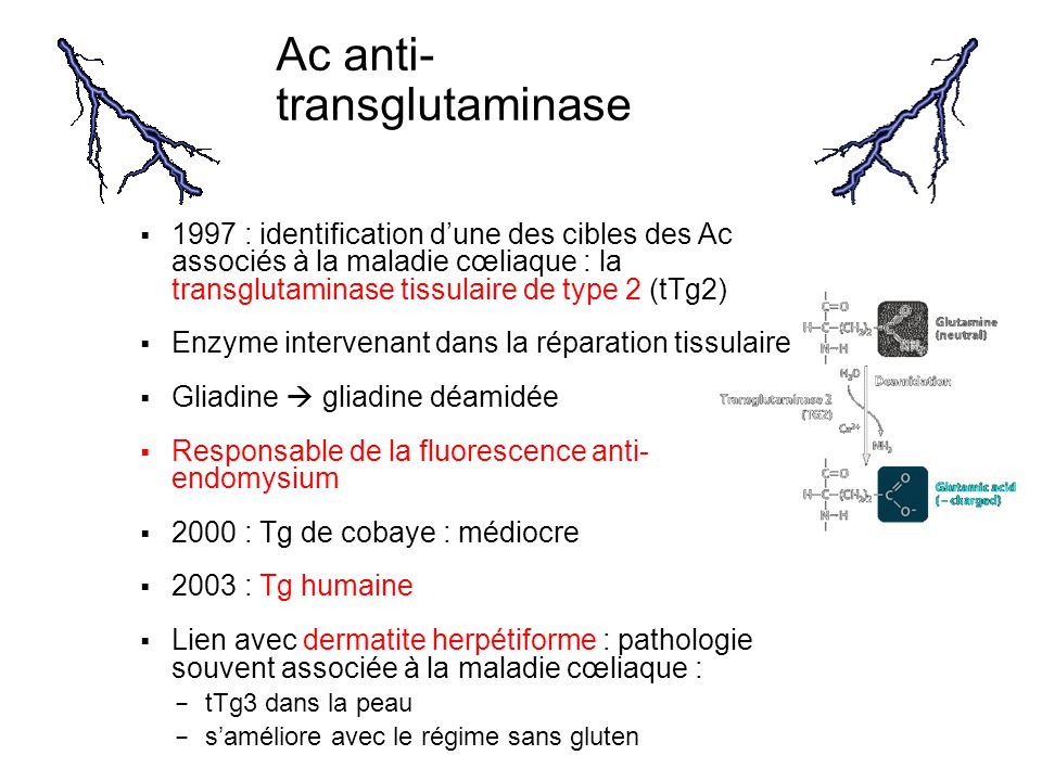 Ac anti-transglutaminase