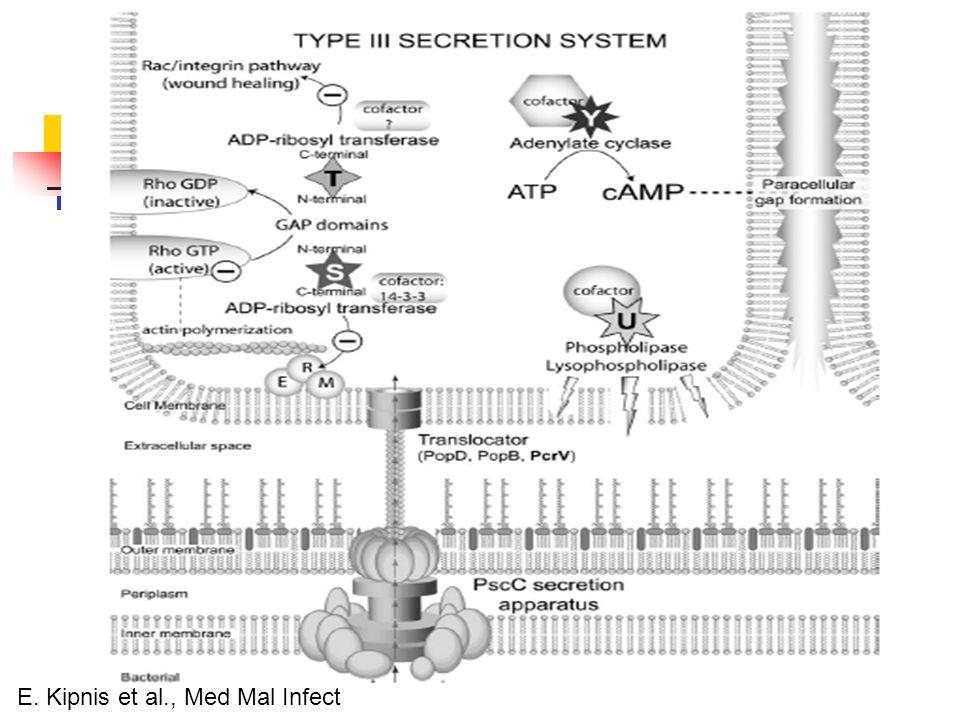 E. Kipnis et al., Med Mal Infect