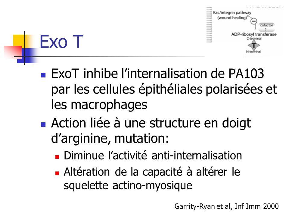 Exo T ExoT inhibe l'internalisation de PA103 par les cellules épithéliales polarisées et les macrophages.