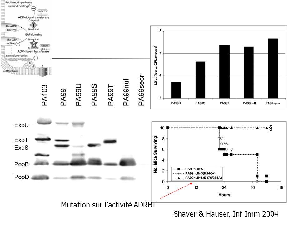 Mutation sur l'activité ADRBT Shaver & Hauser, Inf Imm 2004