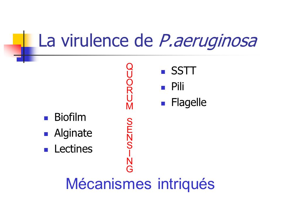 La virulence de P.aeruginosa