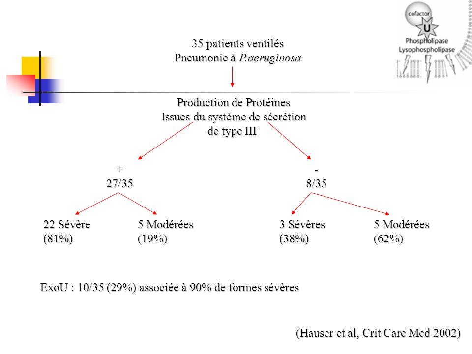 Pneumonie à P.aeruginosa