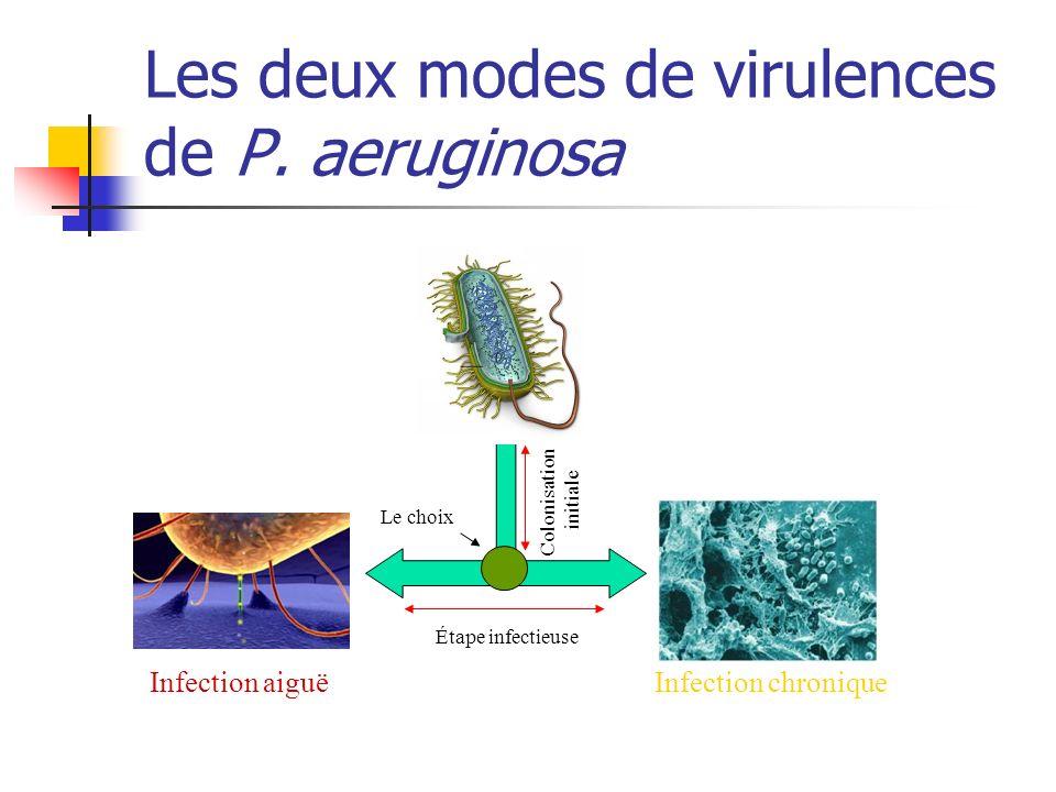 Les deux modes de virulences de P. aeruginosa