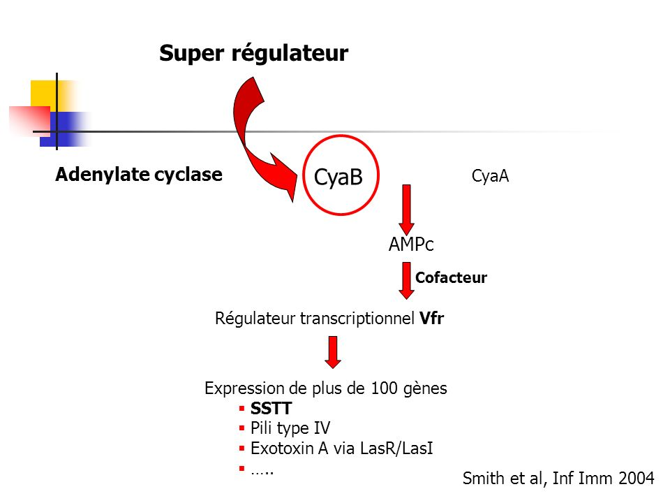 Super régulateur CyaB Adenylate cyclase AMPc CyaA