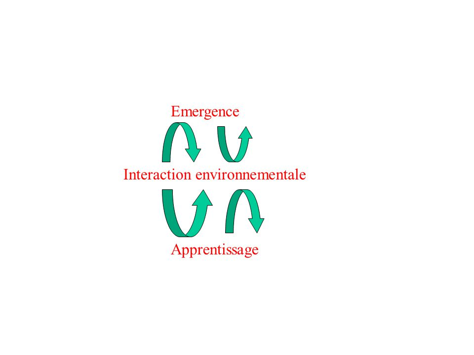 Emergence Interaction environnementale Apprentissage