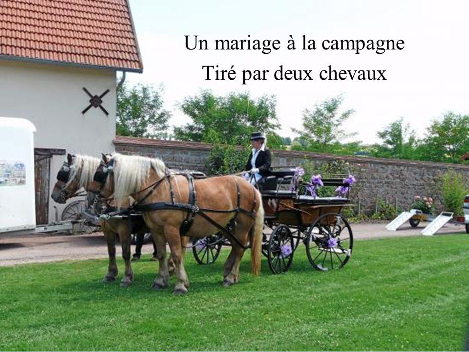 Un mariage à la campagne Tiré par deux chevaux