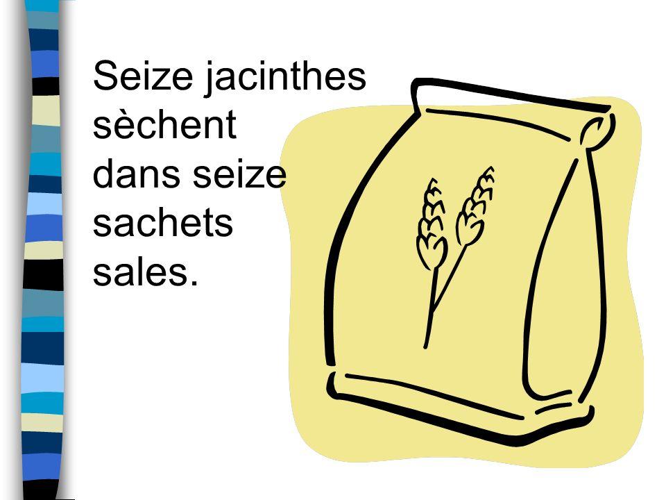 Seize jacinthes sèchent dans seize sachets sales.