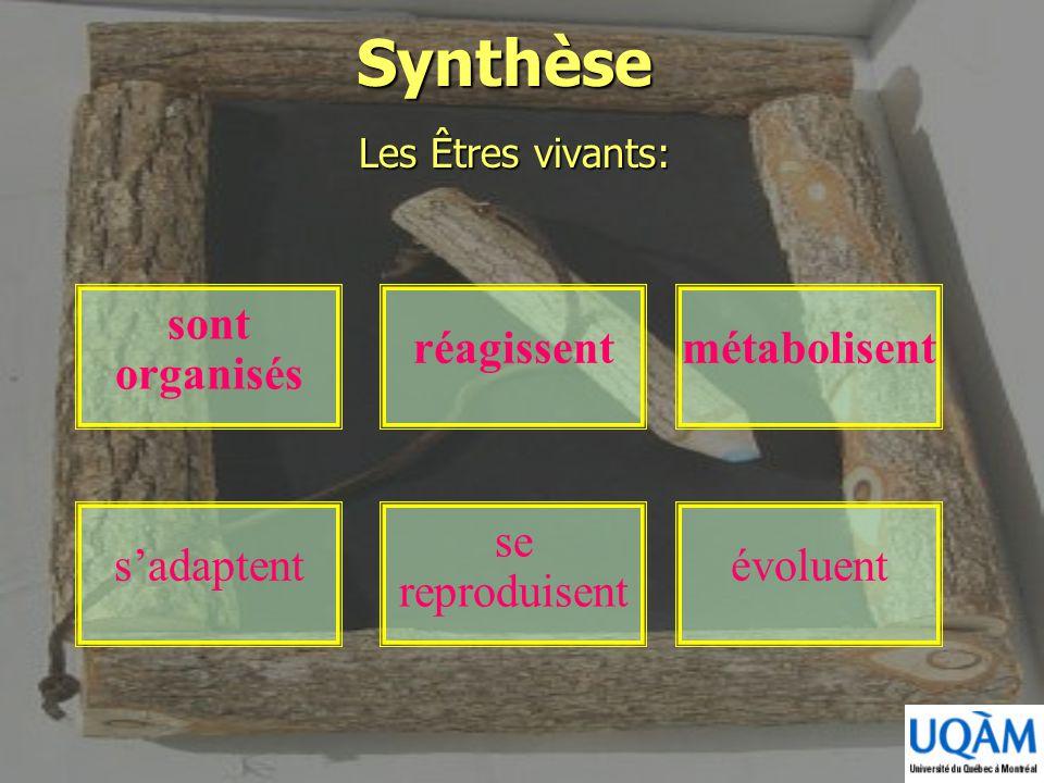 Synthèse sont organisés réagissent métabolisent se reproduisent