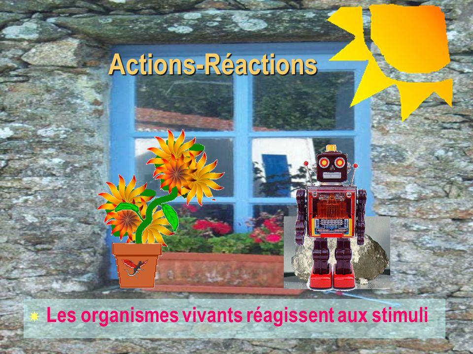 Actions-Réactions Les organismes vivants réagissent aux stimuli