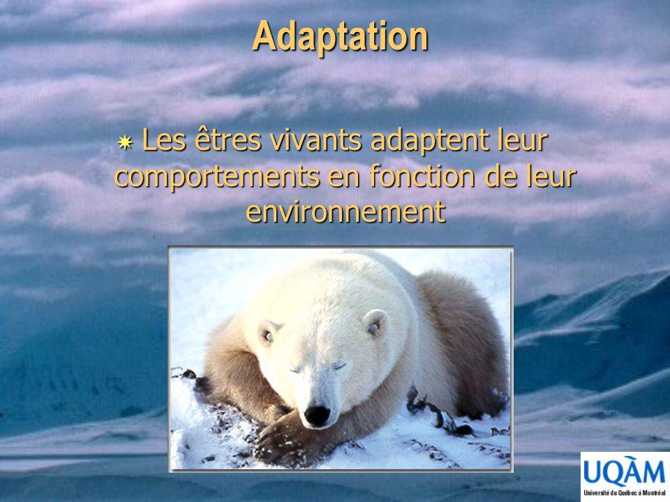 Adaptation Les êtres vivants adaptent leur comportements en fonction de leur environnement