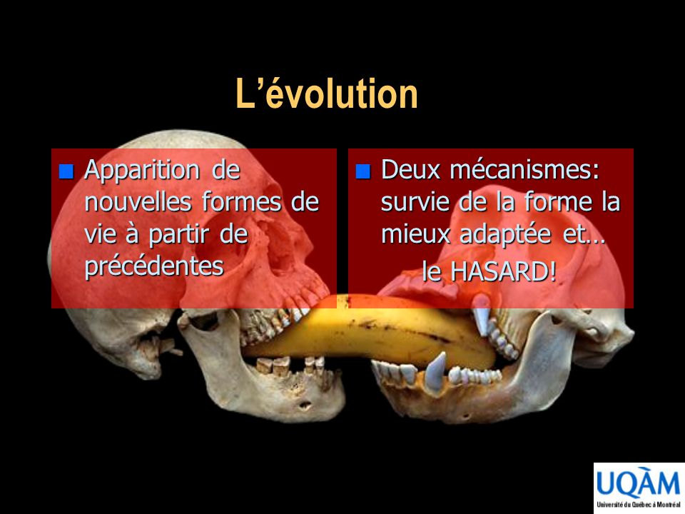 L'évolution Apparition de nouvelles formes de vie à partir de précédentes. Deux mécanismes: survie de la forme la mieux adaptée et…