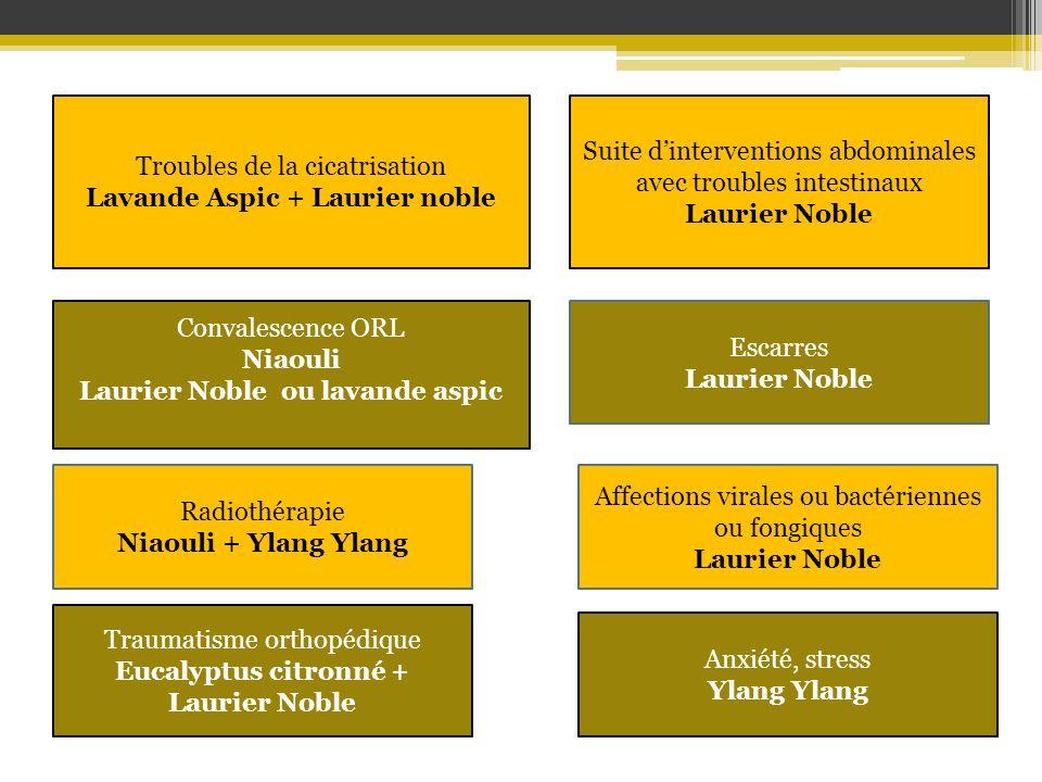 Lavande Aspic + Laurier noble Laurier Noble ou lavande aspic