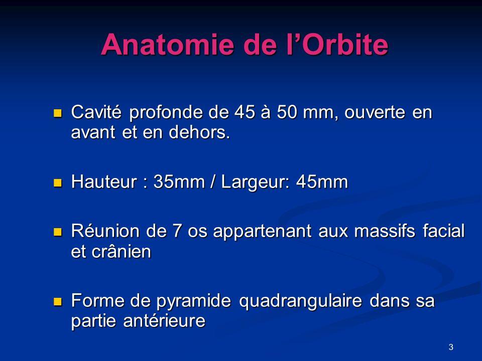 Anatomie de l'OrbiteCavité profonde de 45 à 50 mm, ouverte en avant et en dehors. Hauteur : 35mm / Largeur: 45mm.