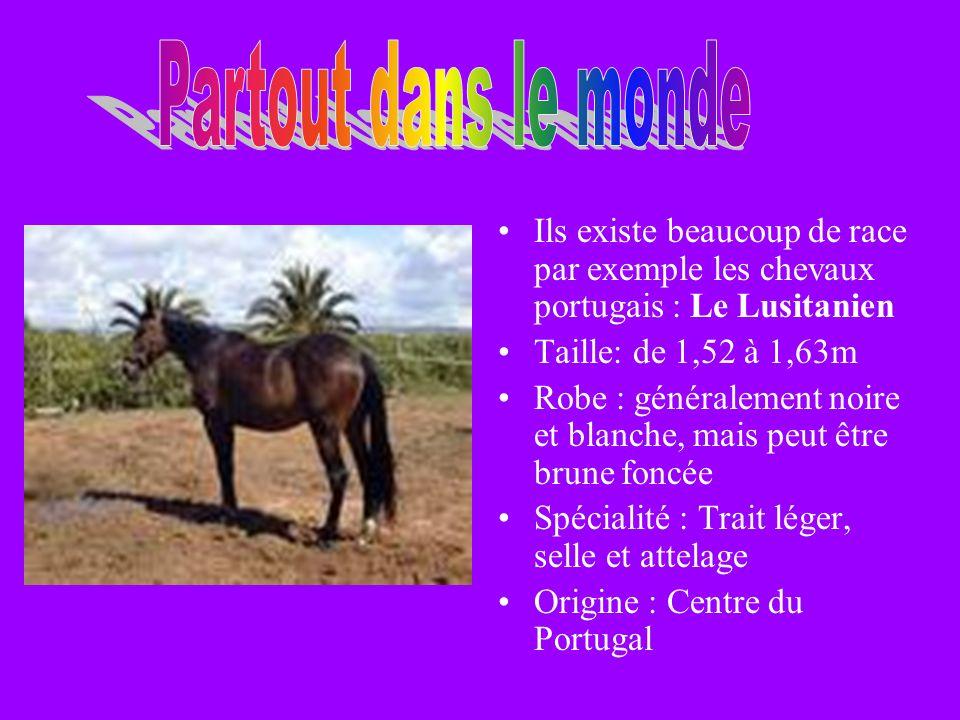 Partout dans le monde Ils existe beaucoup de race par exemple les chevaux portugais : Le Lusitanien.