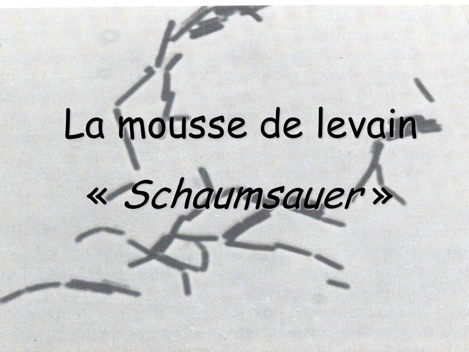 La mousse de levain « Schaumsauer »