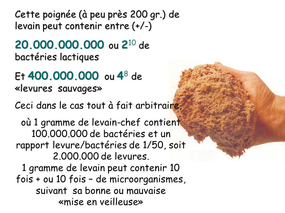 20.000.000.000 ou 210 de bactéries lactiques