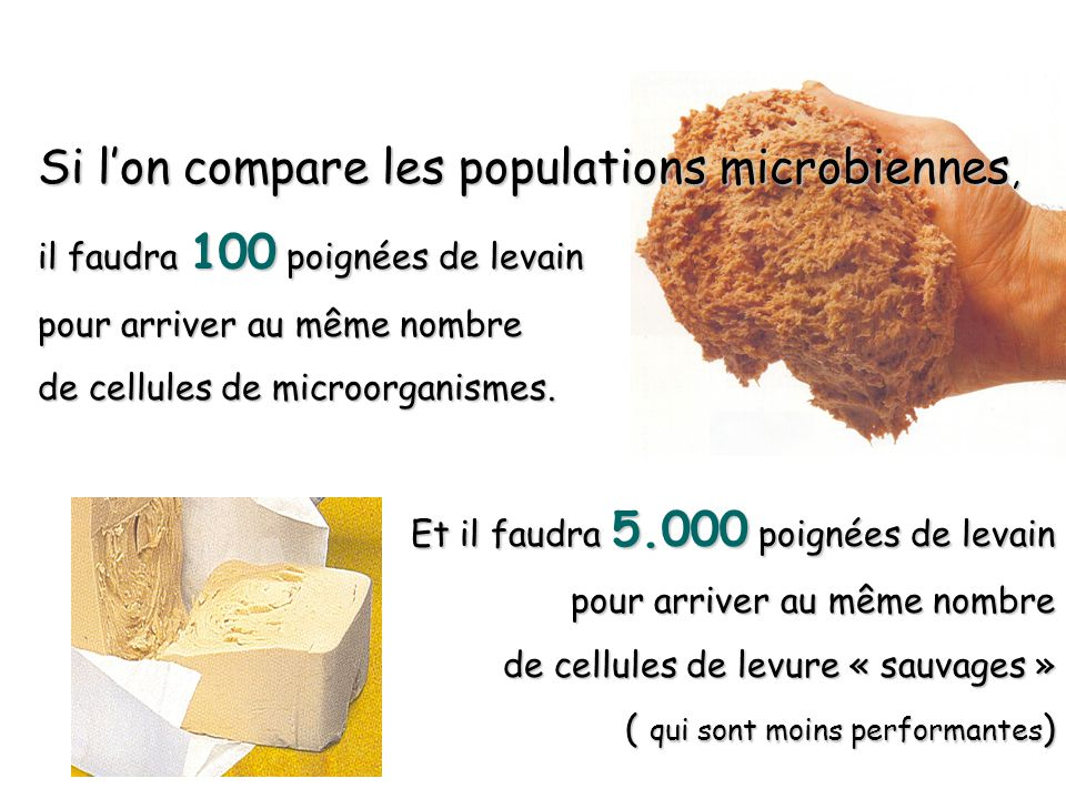 Si l'on compare les populations microbiennes,