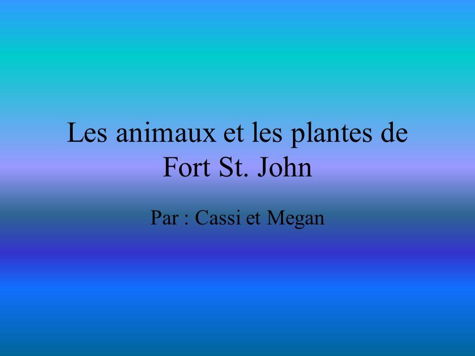 Les animaux et les plantes de Fort St. John