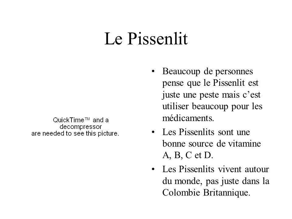 Le Pissenlit Beaucoup de personnes pense que le Pissenlit est juste une peste mais c'est utiliser beaucoup pour les médicaments.