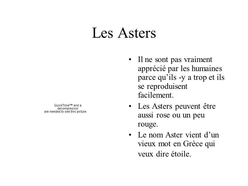 Les Asters Il ne sont pas vraiment apprécié par les humaines parce qu'ils -y a trop et ils se reproduisent facilement.
